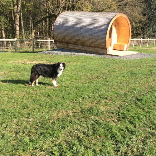 Dog friendly Glamping pods in Ellesmere Shropshire